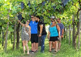 Wine Tour - Tenuta Sorrentino